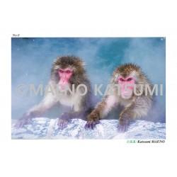 Carte postale MAENO Katsumi - Hokkaido -